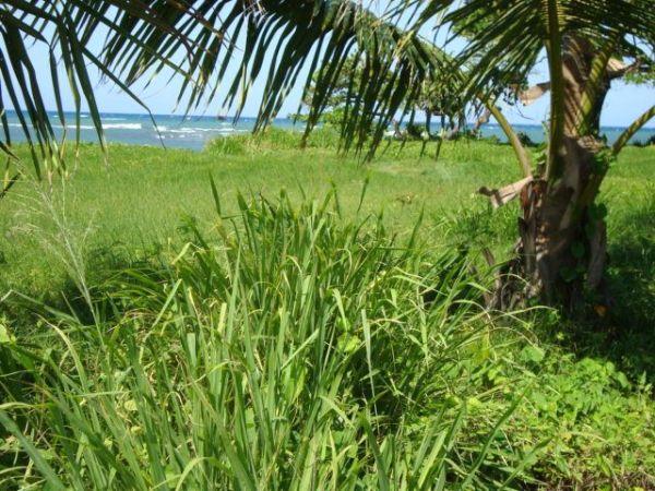 Solares frente Mar en un proyecto con Campo de Golf | Bienes Raices Republica Dominicana